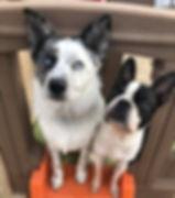 Smalldogplaydaycareedmonton_edited.jpg
