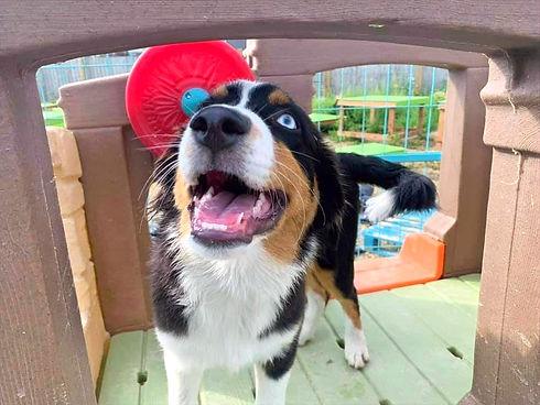 personaldogdaycare.jpg