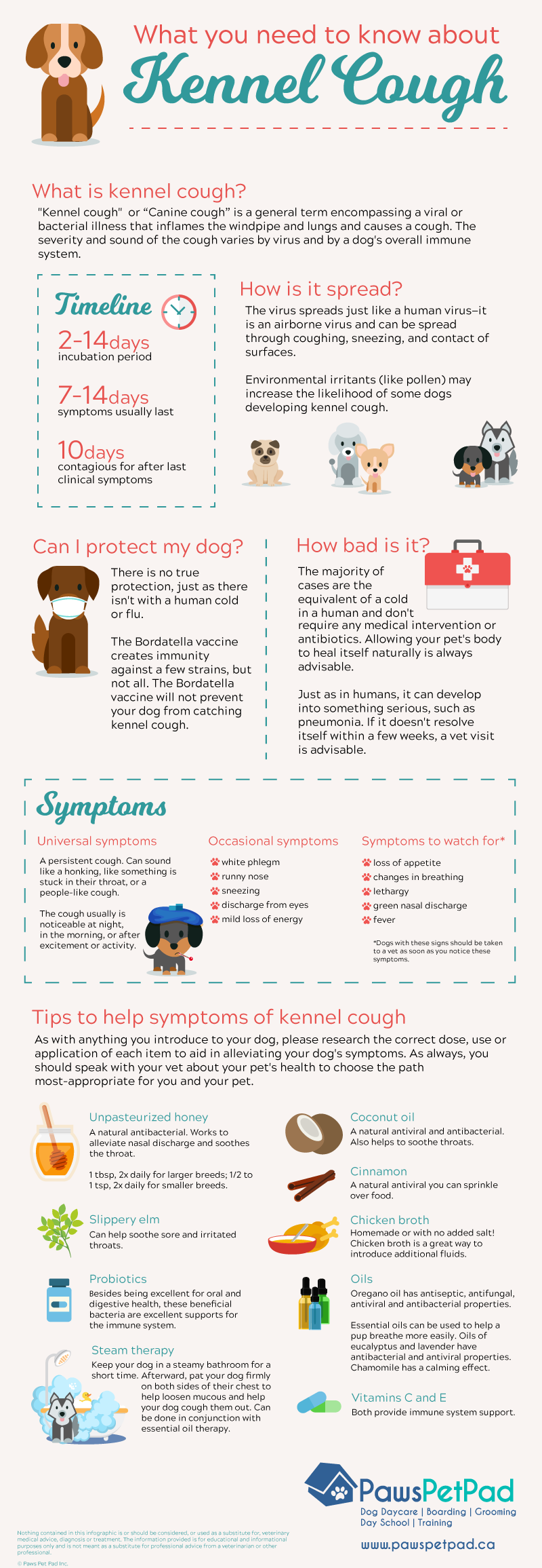 What you need to know about kennel cough infographic
