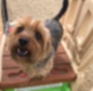 smalldogdaycareleducedmonton_edited.jpg