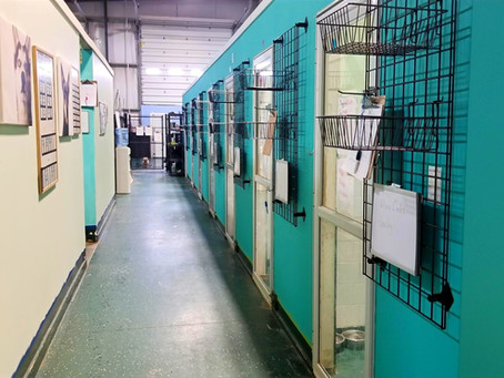 What should you look for in a dog boarding or daycare facility?