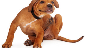 Fleas, Ticks & Lice: To treat or not to treat