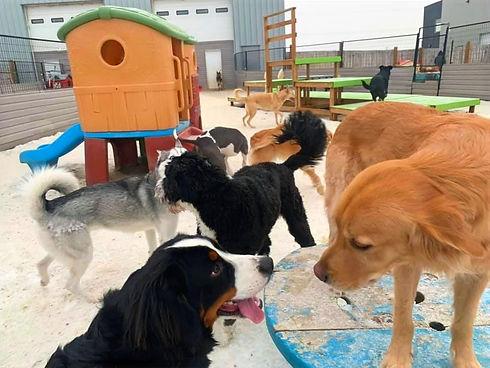 outdoordogdaycareplayground.jpg