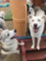 Dogdaycareleducedmonton.jpg