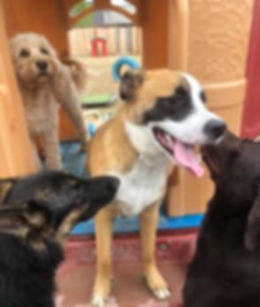 dogdaycareleducoutdoorplay_edited.jpg