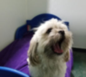 SmalldogBoarding_edited.jpg