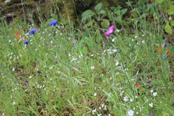 wild flower medow