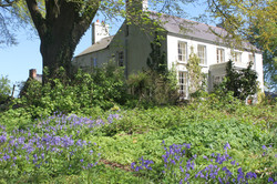 Dromore House bluebells
