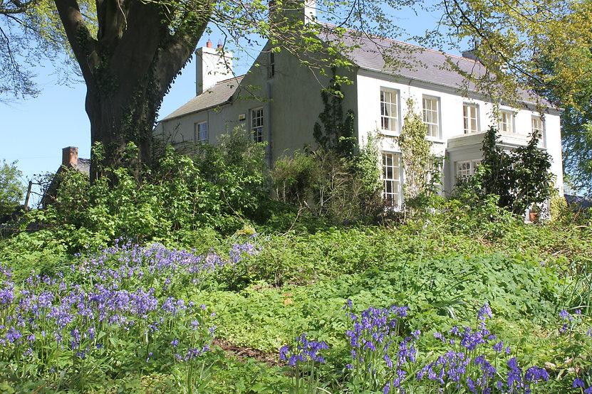 Dromore House bluebells.JPG