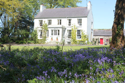 Dromore House bluebells (2)