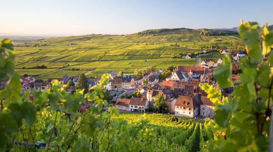 Vignoble de Molsheim