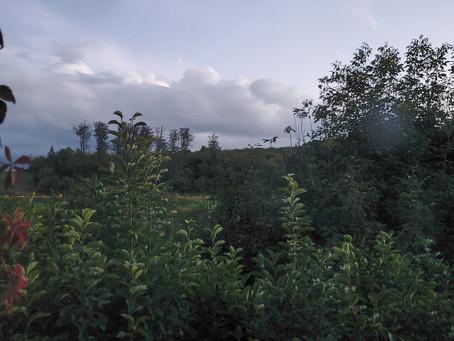 Den Hügel hinauf, in die Bäume hinein