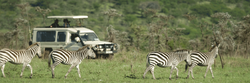 safari_panorama