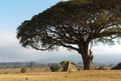 Camping-Safari
