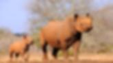 5 Day Camping Safari | Big 5 Over 5 | All Around Tanzania Safaris
