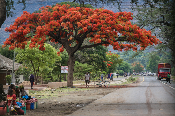 Main-road-near-Lake-Manyara