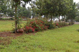 Landscaped, lush camping grounds