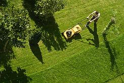 Homme, tonte, pelouse