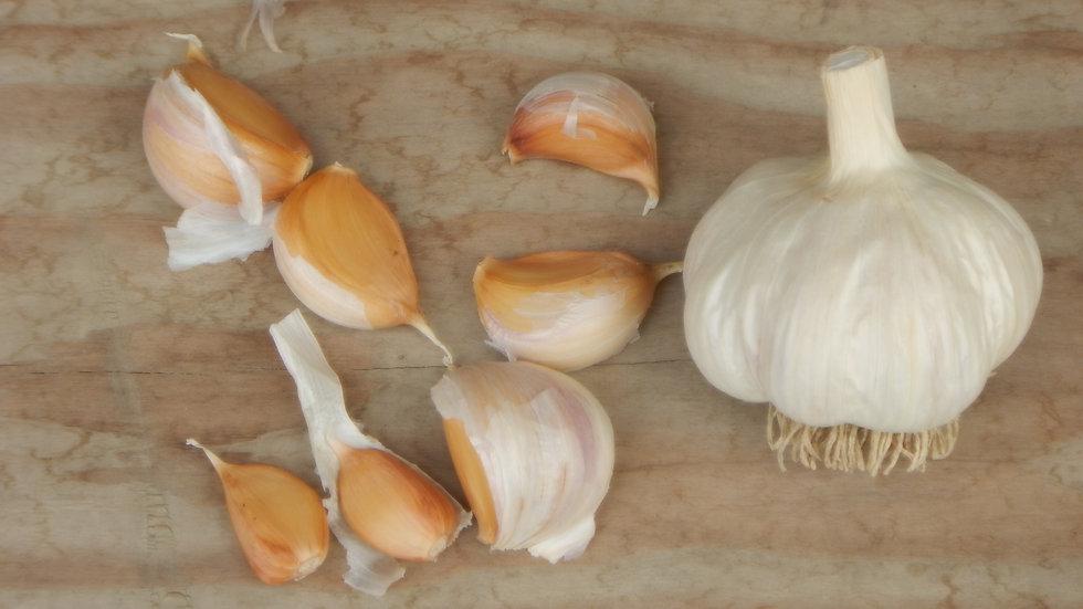 German Red Seed Garlic