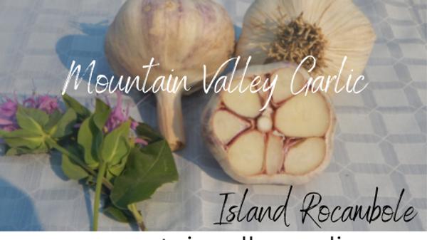 Island Rocambole Seed Garlic