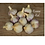 Thumbnail: 6 Pound Garden Sampler