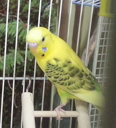 BIRDS FOR ADOPTION | Bird Shops | Scottsdale | AZ Exotic Bird Rescue