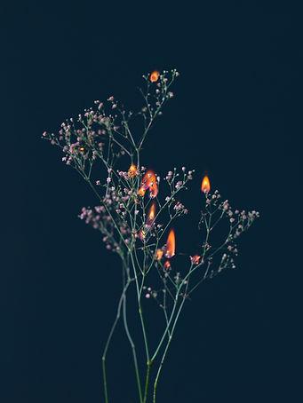 SINIKOSKI_Ghost Study with Flowers n°23.