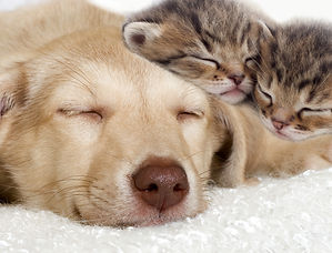 Dog and two kittens napping.Cat sitting cat sitter pet sitting pet sitter Bellingham