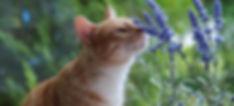 Flower Essences for Cats cat sitting pet sitting cat sitter pet sitter Bellingham