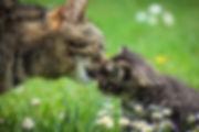 Senior cat Kitten Cat sitting pet sitting cat sitter pet sitter Bellingham