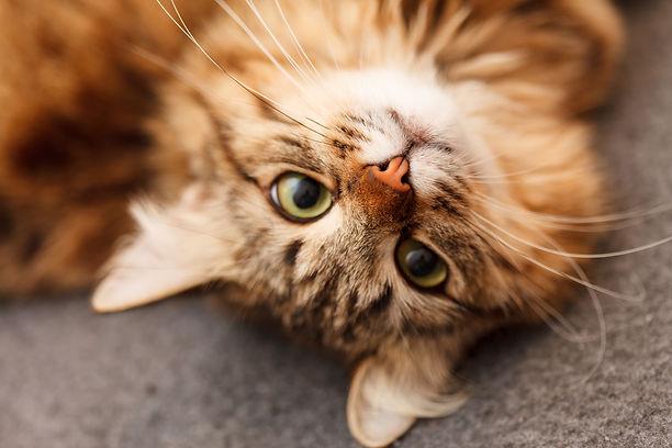 Professional cat sitting, in-home cat sitting, cat sitter, holistic cat care, acupressure, Jin Shin Jyutsu