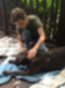 Large dog receiving acupressure and Jin Shin Jyutsu,