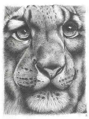 tigre dessin crayon Ma Griffe