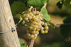grape-2763256__480.jpg