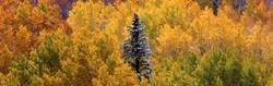 aspens&pine_0317_edited