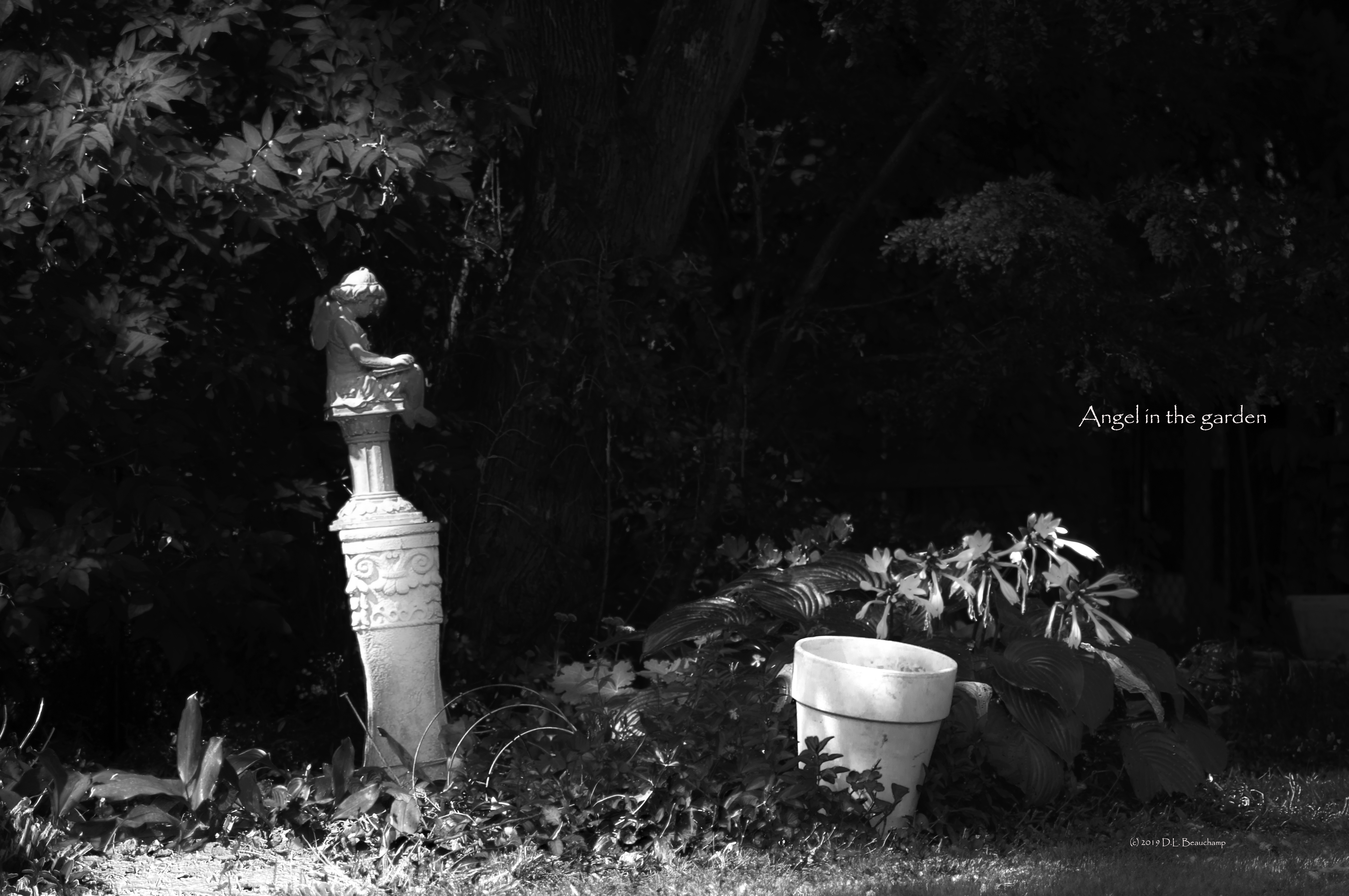 Angel_in_the_garden_black_and_white