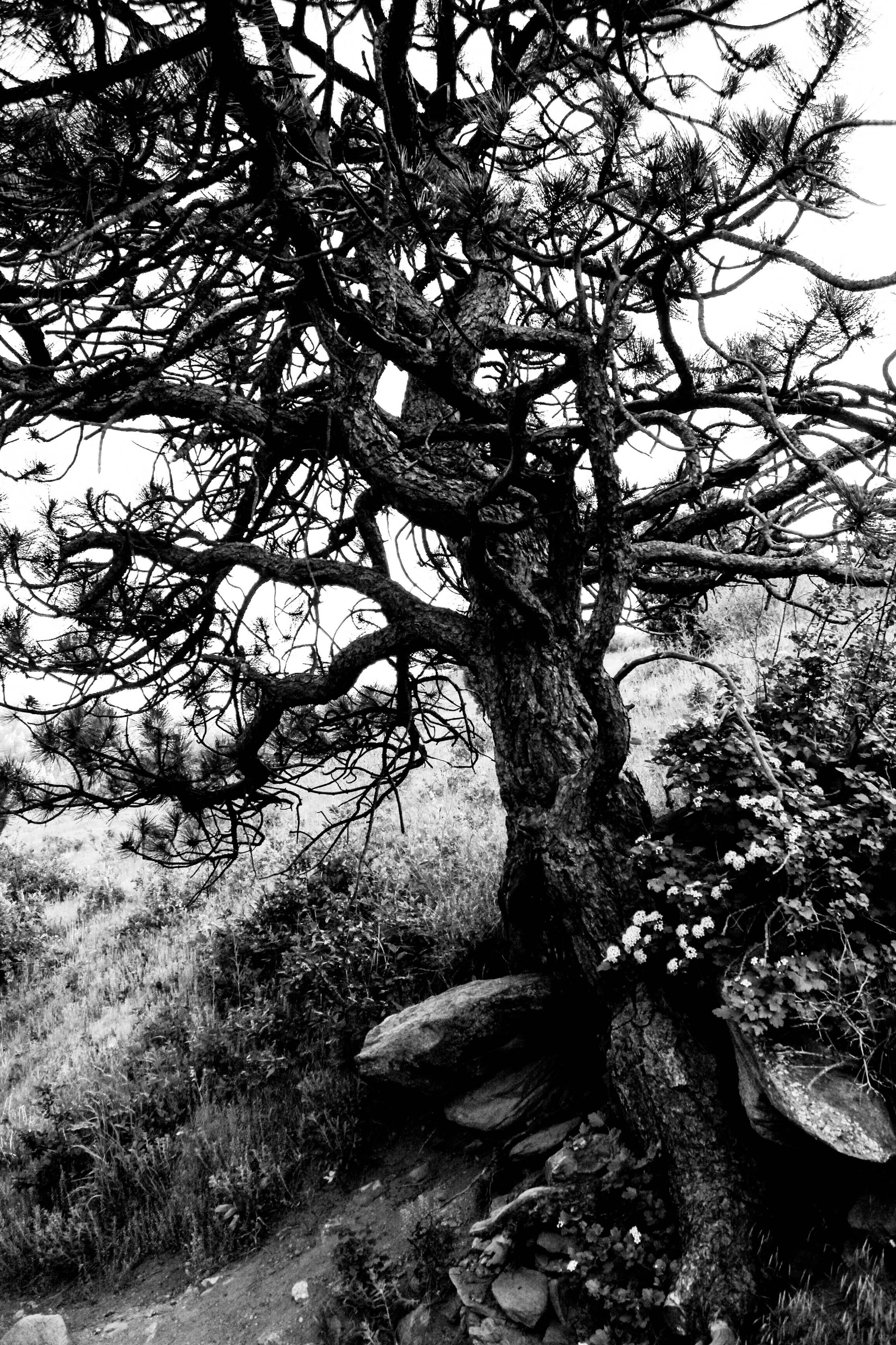 Static_Trees-1-4