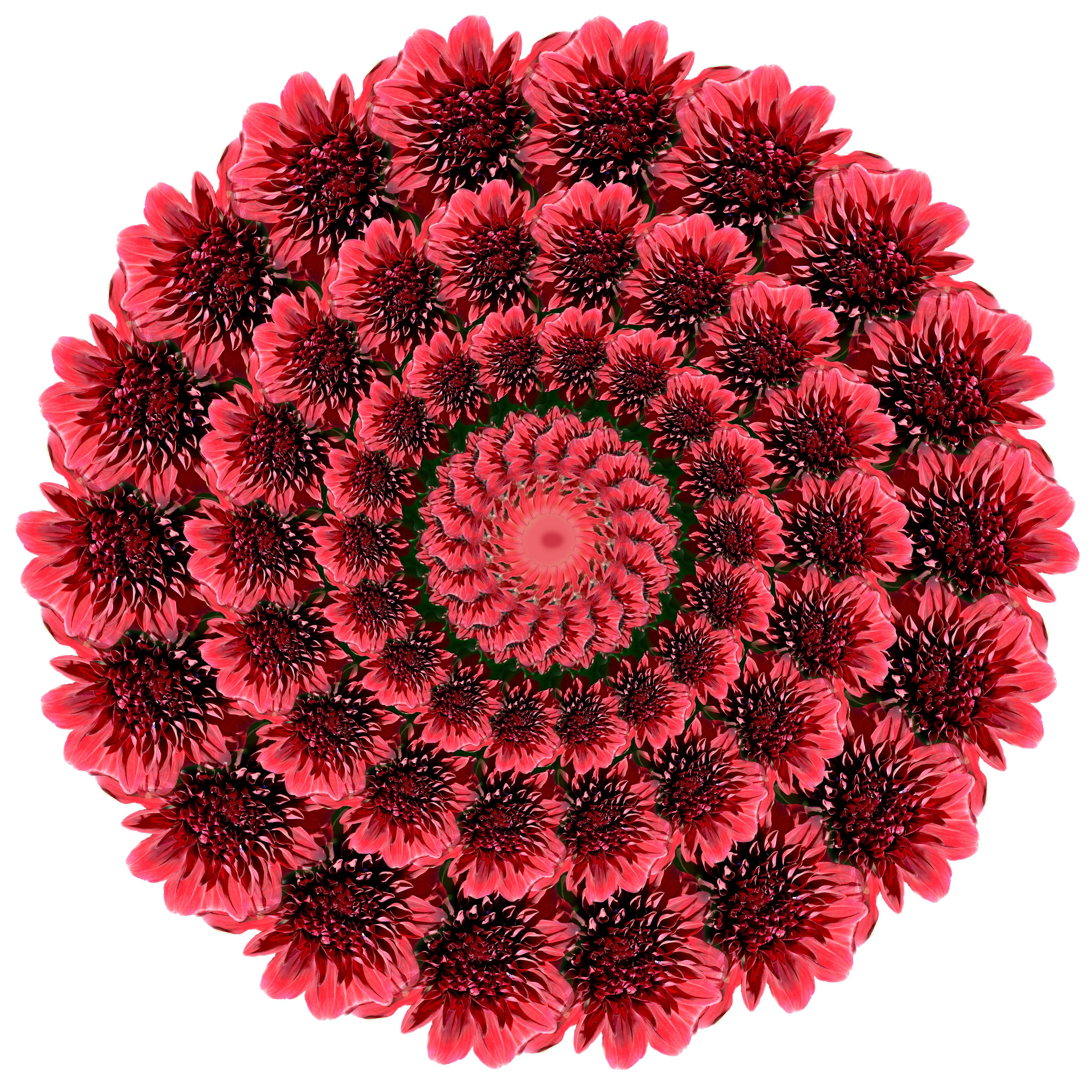 Olejarz_Harold_Flower4