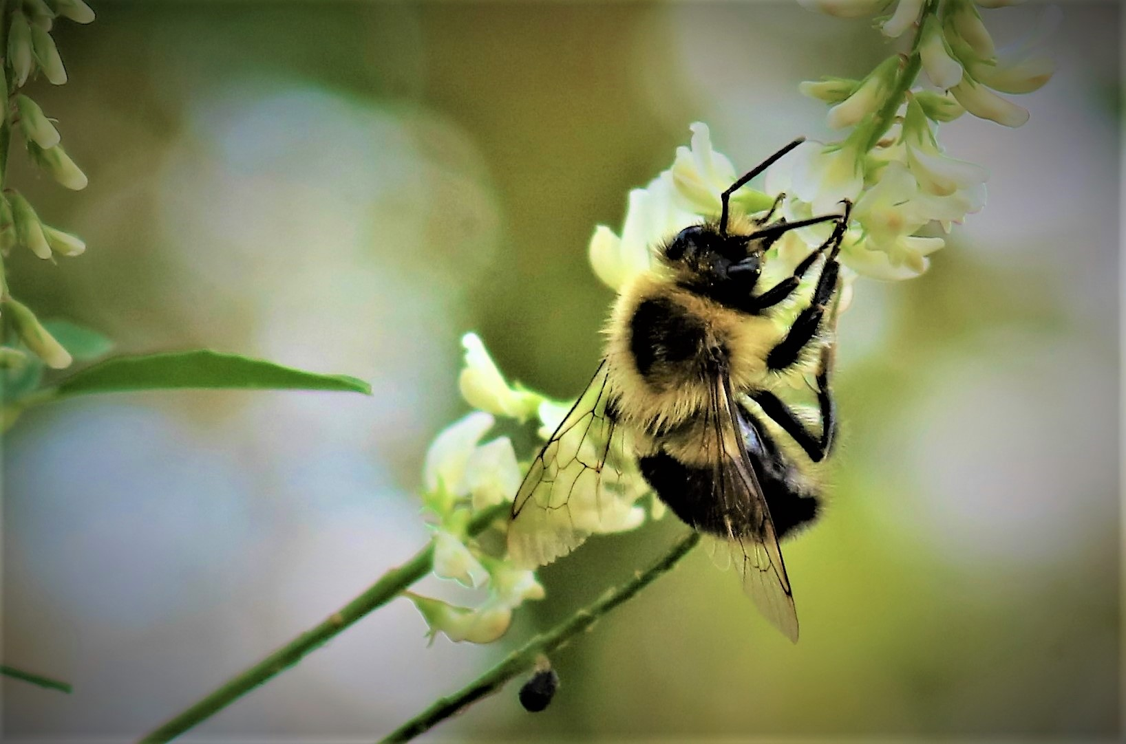 bee_and_flower