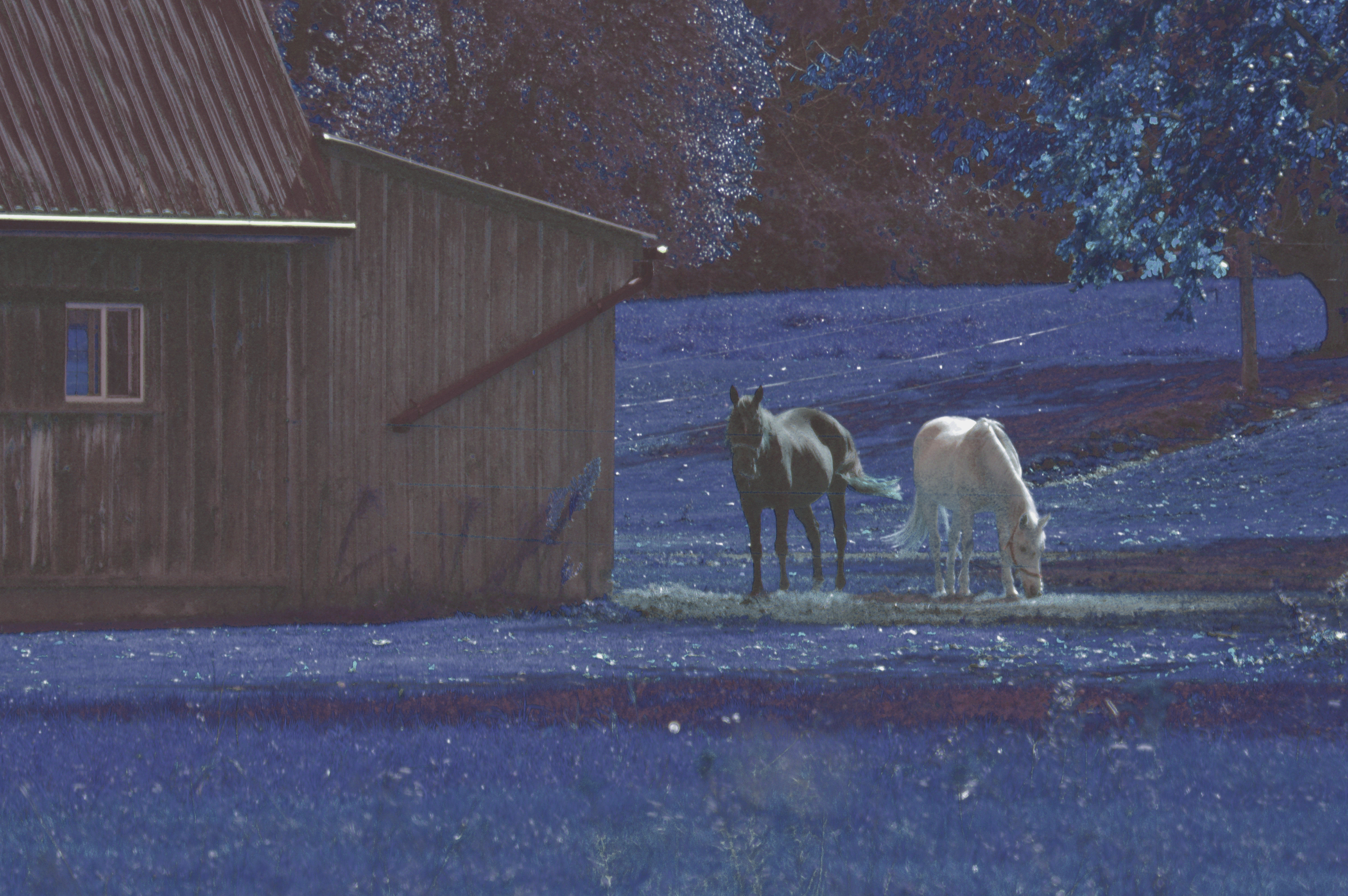 two_horses_blue