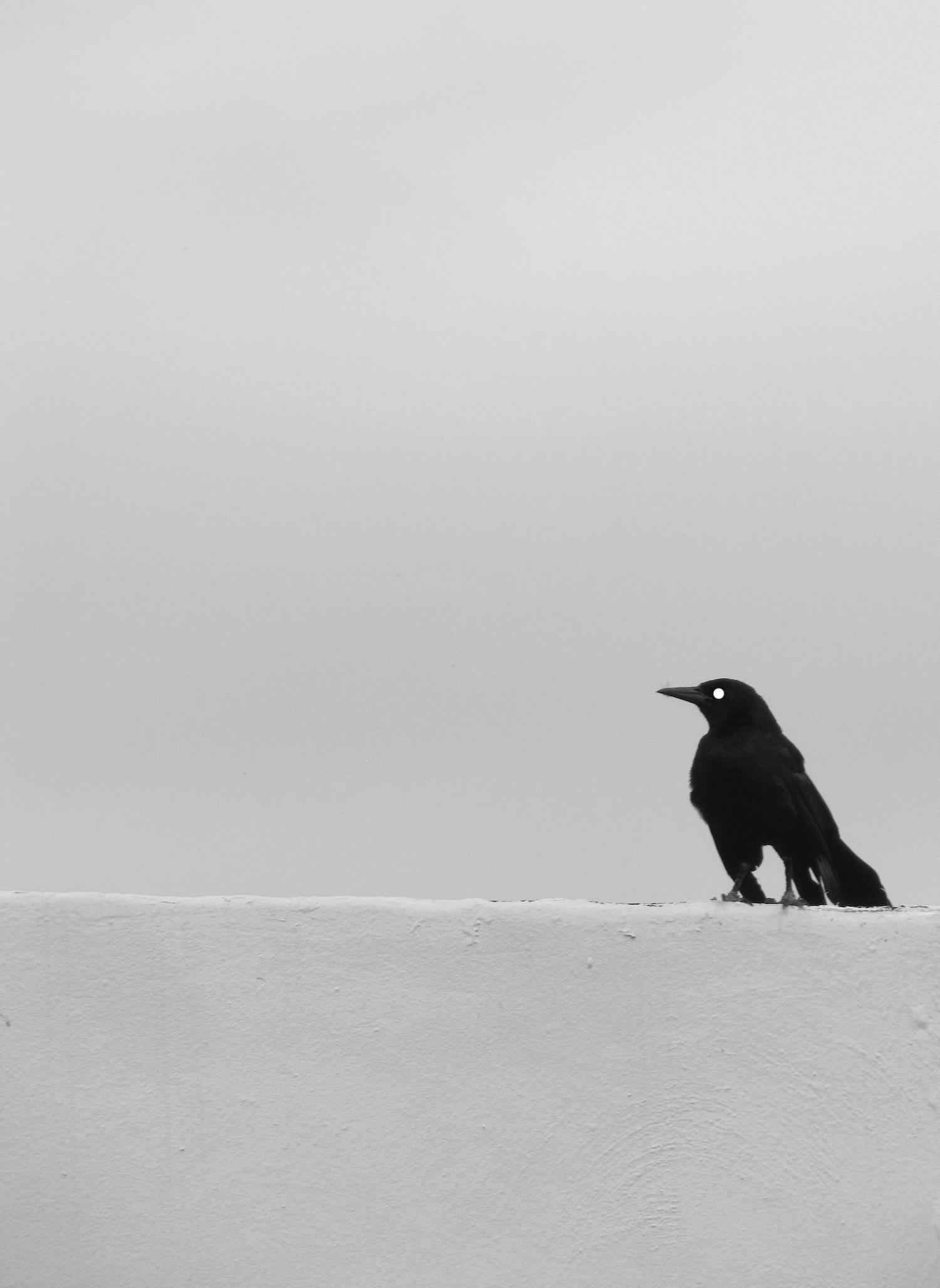 BlackBirdOnLedge