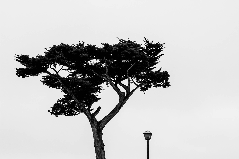 Static_Trees-1-2