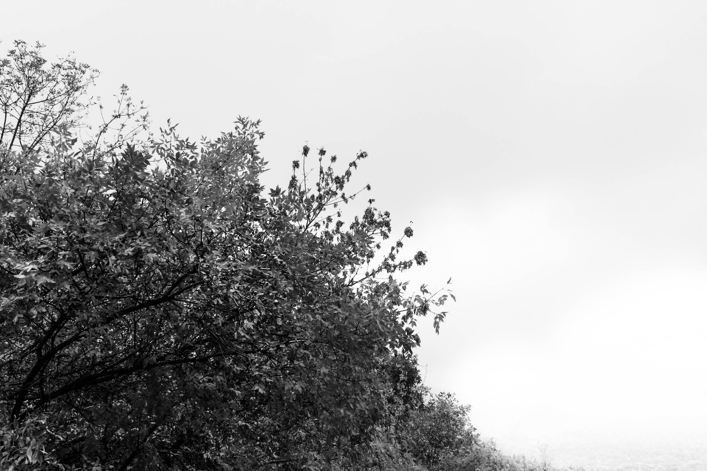 Static_Trees-1-3
