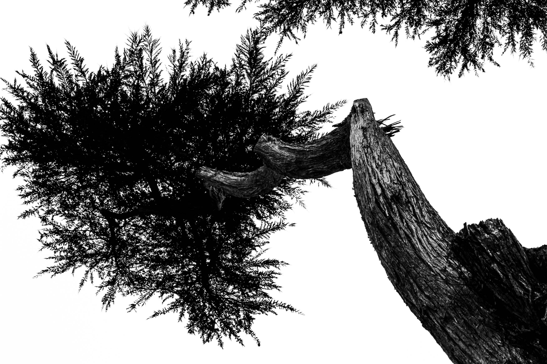 Static_Trees-1