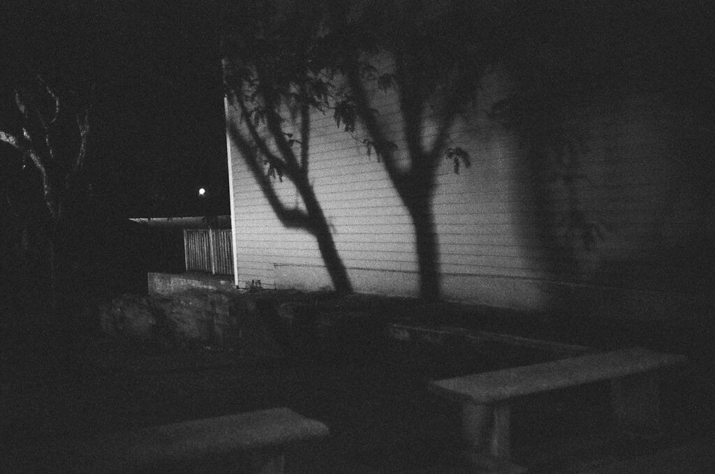 Tree_shadow_lg_2