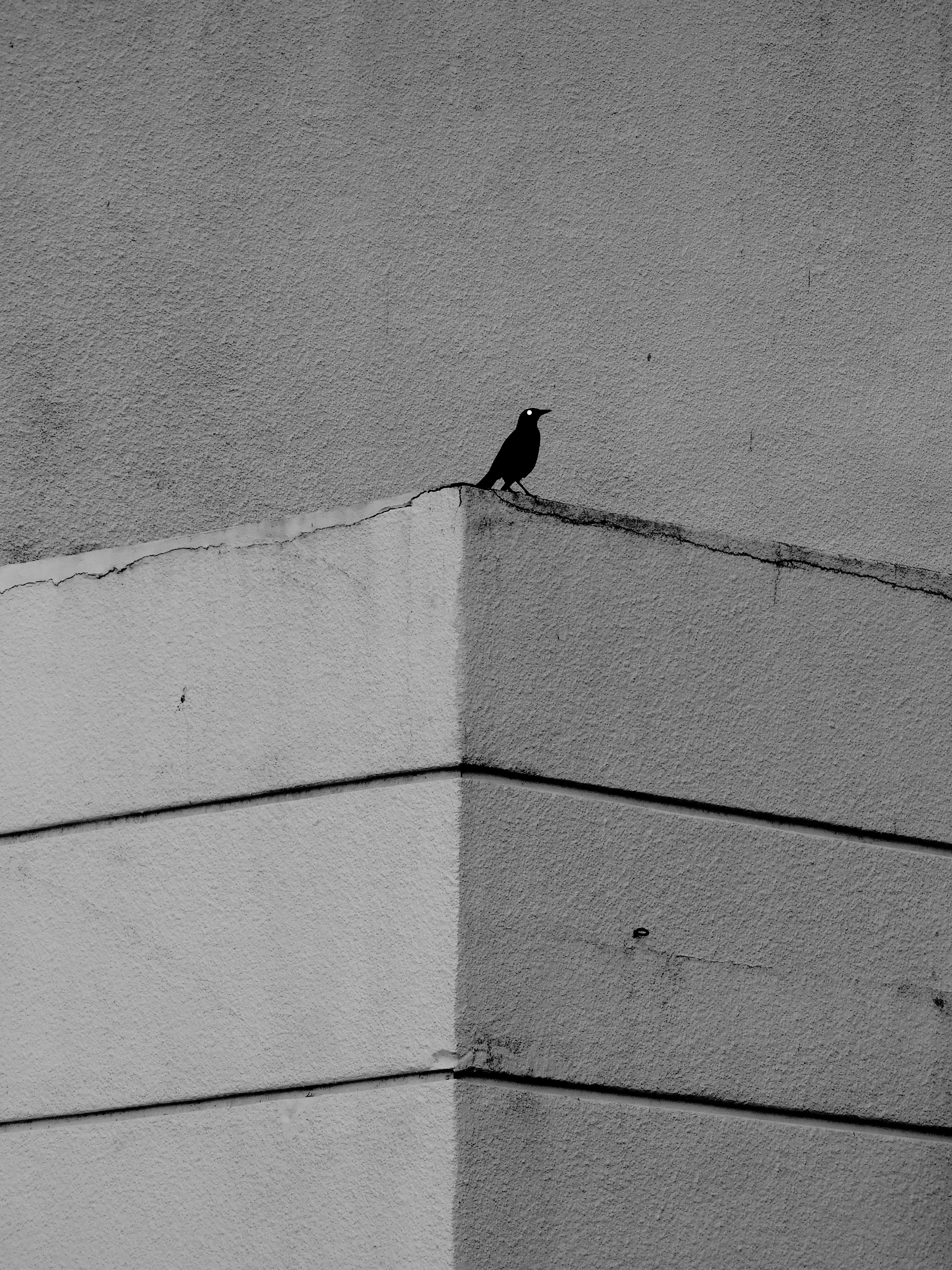 BirdOnTheLedge
