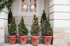 pines in pots.jpeg