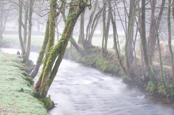 Cornish Misty River, UK