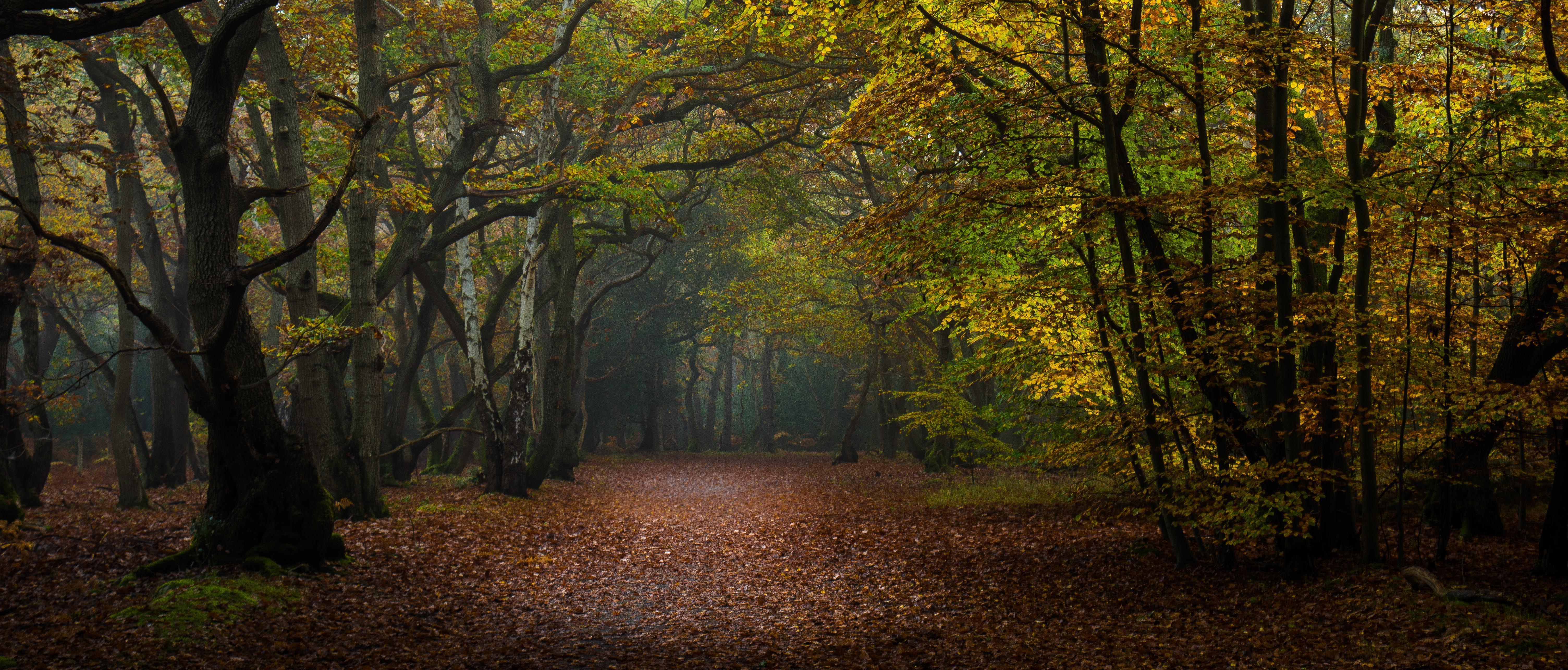 Burnham Beeches, UK