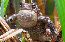 toad music tn.jpg